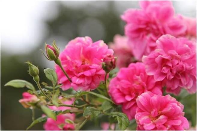 防疫時刻多走向大自然並欣賞花的美麗。(朱正生提供)