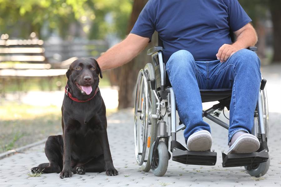 寵物犬幫老翁推輪椅散步 讓路人非常感動(示意圖/達志影像)