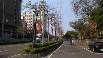 韓國瑜移除300棵市樹…惹怒愛樹人 當地居民說話了