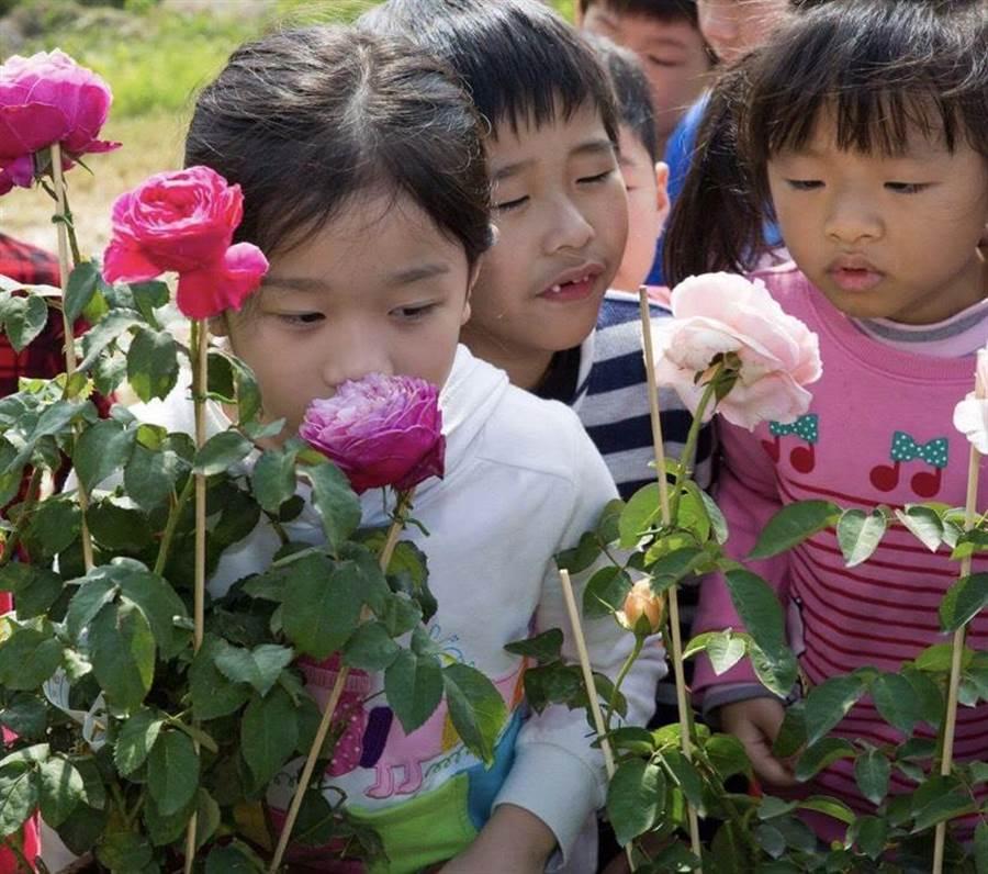 農場主人鄭宇超堅持以無毒方式栽培1000多株有機玫瑰,讓民眾安心體驗各項玫瑰遊程。(曙光玫瑰有機農場提供/張毓翎嘉義傳真)