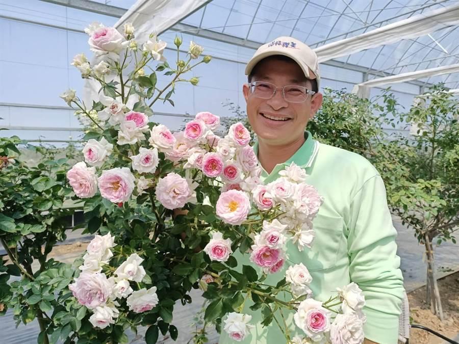 農場主人鄭宇超堅持以無毒方式栽培1000多株有機玫瑰,讓民眾安心體驗各項玫瑰遊程。(張毓翎攝)