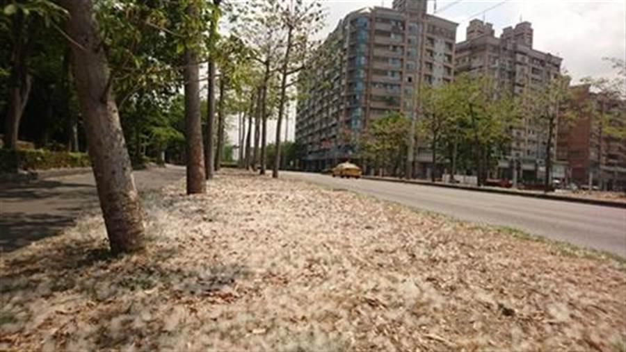 木棉花絮影響環境,造成附近居民過敏。(圖/摘自高雄市工務局)