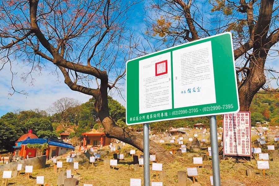 新莊區第一公墓2月起公告遷葬,最快明年6月完成遷葬工程,並實施簡易綠美化。(新莊區公所提供╱吳亮賢新北傳真)