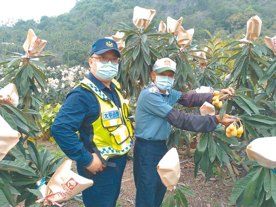 台中太平枇杷收成,警方特別在這段期間實施「護農專案」,加強巡邏勤務,讓農民備感溫馨。(馮惠宜攝)