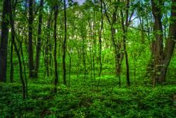 名家論壇》植樹節有感 我們如何與地球和解