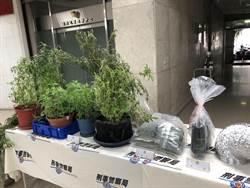 網路自學種大麻 公寓成溫室種植場