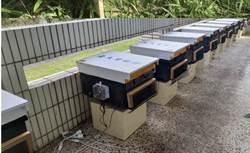 林下養蜂拚經濟 智慧蜂箱即時監控溫溼度