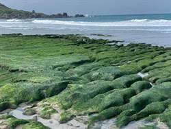 北海岸老梅石槽「綠」了!和平島公園植樹愛自然