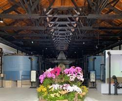 山上花園水道博物館蘭展 結合蘭花與古蹟特色