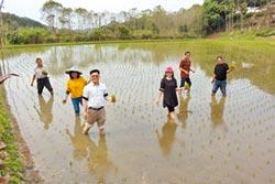 石虎米補秧 智邦科技加入契作