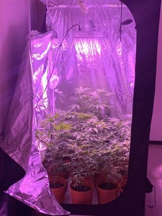 在家當起「自耕農」 2嫌社區大樓種大麻