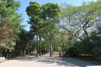 左營綠園道樹木有望保留 黃捷籲市府重視護樹