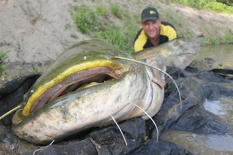 德國漁夫葛溫達釣起一條體長274公分、重達129公斤的超巨型鯰魚。(照片來源:Benjamin Gründer臉書)