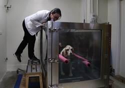 北市动物安养机构 首创分级照护制度