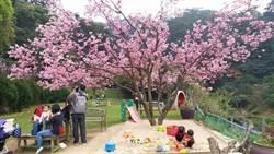 新北八里女青農「桃樂絲森林」 漫步柚子林與兔子、天竺鼠互動