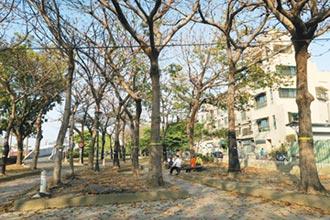 左營綠園道路樹 保存有望