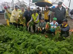 微雨澆不熄興致 遊客湧將軍賞木棉花、拔紅蘿蔔