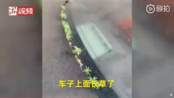 武漢市民:汽車長草了 網民百感交集:春天到了?