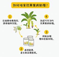 獨家基因序列 守護香蕉王國