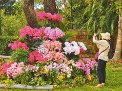 台南遍地開花 賞蘭一日遊拚觀光