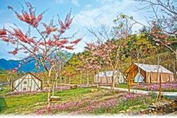 寶來溫泉公園 陣雨樹盛開