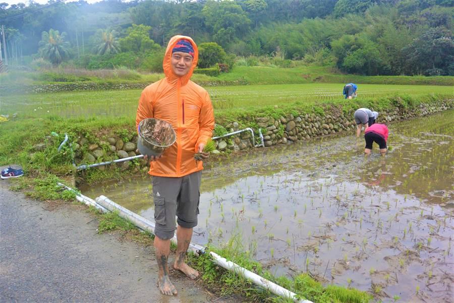 志工們秀出準備要補的秧苗及剛撿到的福壽螺。(巫靜婷攝)