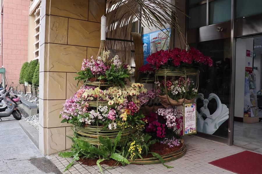 響應2020台灣國際蘭展「遍地開花」行動,現在到台南市新營區公所也可以欣賞蘭花之美。(台南市新營區公所提供/劉秀芬台南傳真)