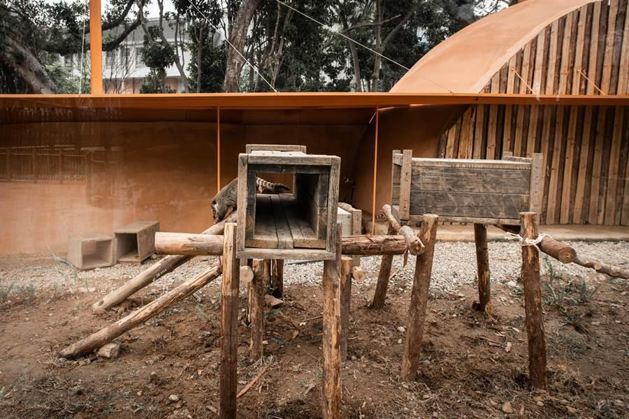 市立動物園內最近利用剩餘原木幫浣熊打造遊具,讓浣熊有更豐富多元的活動空間。(市府提供/邱立雅竹市傳真)