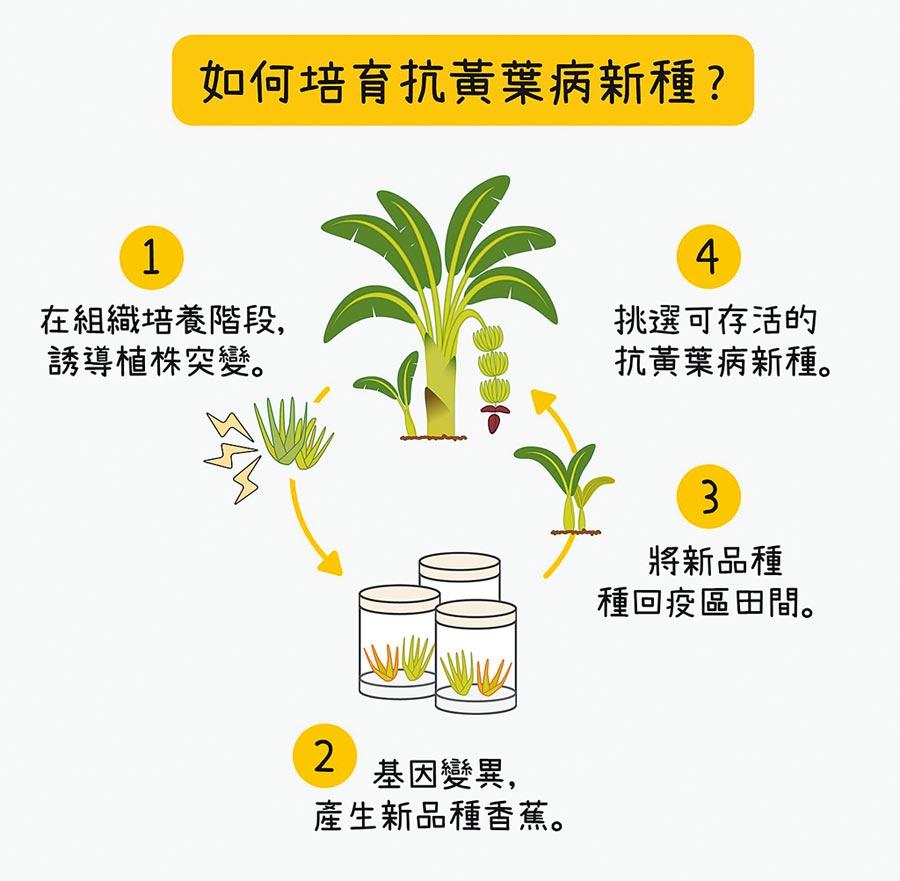 中研院農業生物科技研究中心副研究員陳荷明及其研究團隊,找到DNA特殊序列,保障我國香蕉品種專利權。(中研院提供/李侑珊台北傳真)
