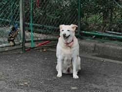 北市動物之家推老犬貓免費納保 醫療費最高負擔1萬元