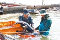 智慧感測 養殖石斑魚更聰明