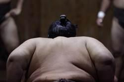 大相撲有力士發燒!日網友關注