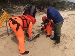 海洋生態悲歌 金門連3起海豚陳屍海岸