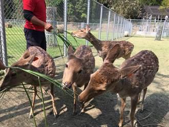 疫情影響逐鹿社區生意銳減 鹿園試營運吸客