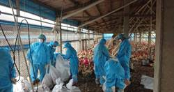 禽流感疫情連環爆 雞蛋缺貨更嚴重