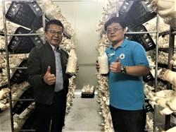 科技新貴改當菇農 拚出台南最大有機杏鮑菇農場