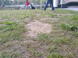 大湖公園慘變「鬼剃頭」 公園處安排綠地輪休