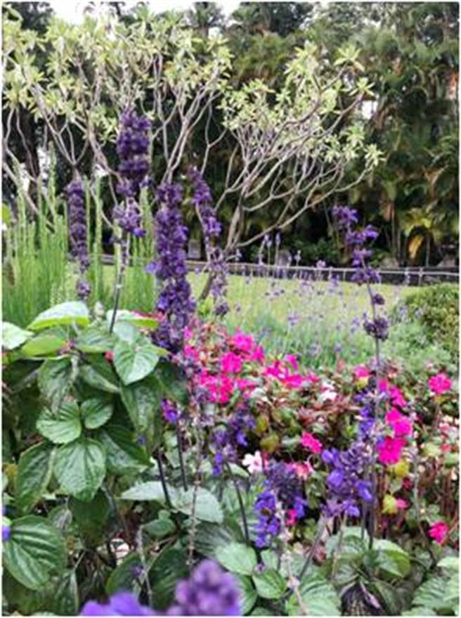 精油從植物根、莖、葉、花、果實萃取而出。(朱正生提供)