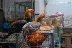 斷翅膀、縫眼睛活體烹煮 越南驚見野味市場