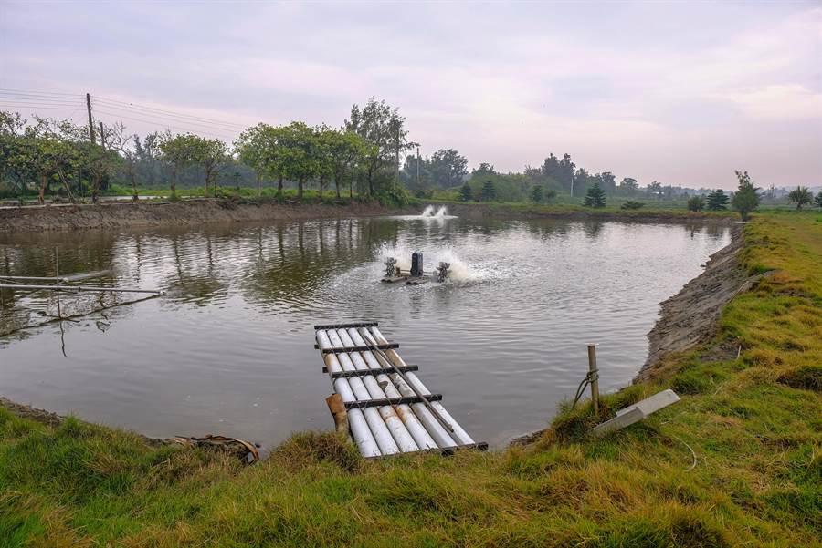 漁民擔心BOO焚化爐會產生戴奧辛落塵,將汙染66公頃的拔仔窟烏魚養殖區。(羅浚濱攝)