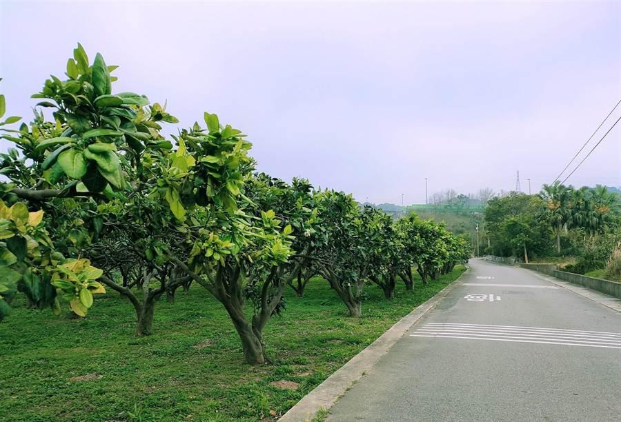 西湖鄉歡迎遊客到柚子山健行,活絡身心。(西湖鄉休閒產業發展協會提供/巫靜婷苗栗傳真)