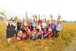 彰化麥向大城 推廣混搭安心農特產