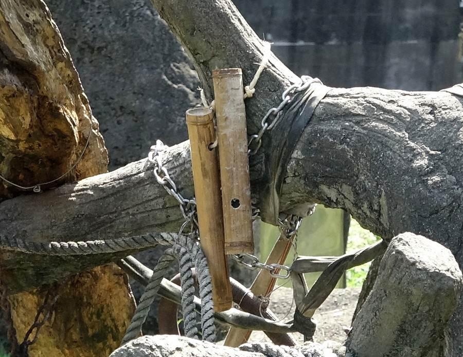 園方為聰明的黑猩猩準備新玩具,做為行為豐富化的新設施。(台北市立動物園提供)