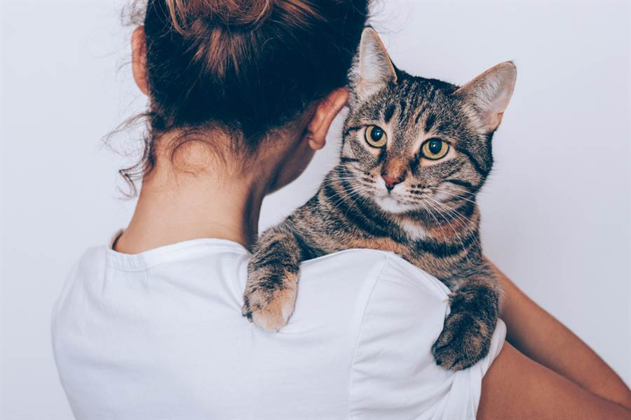 有民眾撿到流浪貓帶回家養,想和牠親近卻被哈氣勸退,讓他很苦惱。(示意圖/ 取自達志影像)