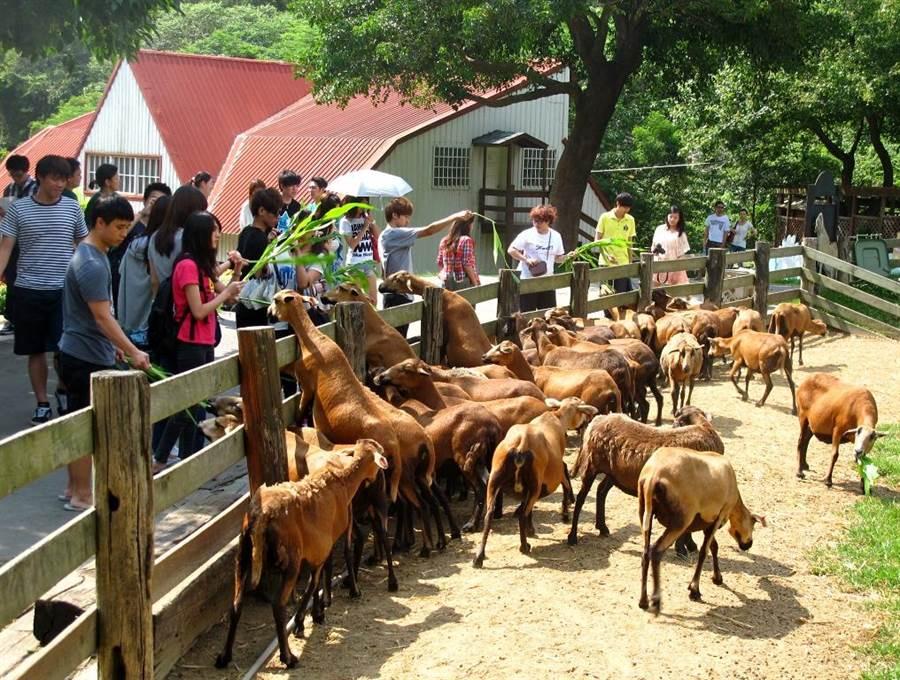 「來去農場住一晚」專案,推出一系列結合農事體驗、美食美食和健康生活的行程。(雄獅旅遊提供)