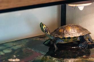 男遇烏龜狠咬不放 家中一物神救援