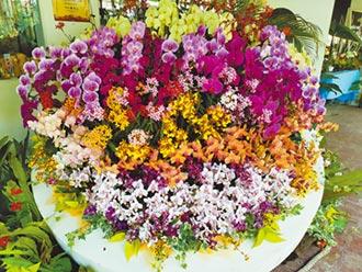 蘭科植物園自辦蘭展 名花爭豔