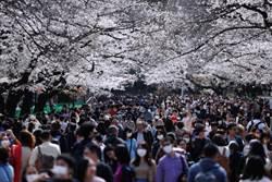 無懼疫情!日本上野公園湧入賞櫻潮 忽視禁令席地野餐