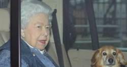 白金漢宮人員確診!女王當時還在倫敦 急撤溫莎堡