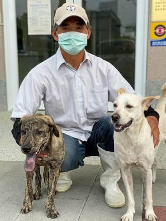 棄養幼犬受傷癱瘓,嘉義獸醫師陪做復健能跑了